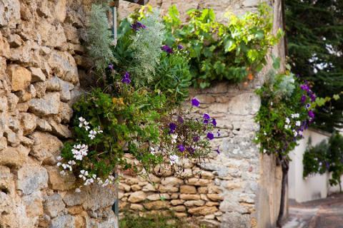 Aubigné_fleurissement des murs_© J.-P. Berlose