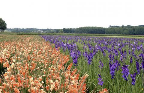 Blaison-Gohier_fleurs et bourg <sup>©</sup> Commune de Blaison-Gohier